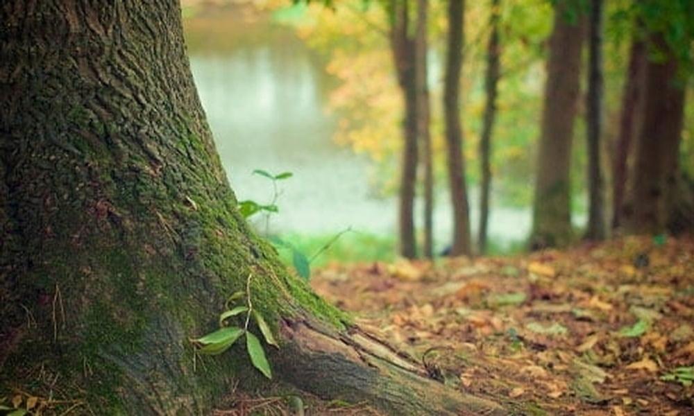 Como mais um fruto do Programa Floresta+, o Ministério do Meio Ambiente institui o Programa Floresta + Empreendedor, através da Portaria nº 109, de 24 de março de 2021 e assina Acordo de Cooperação Técnica com o SEBRAE